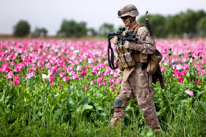 Record Afghan Opium Crop Signals Violent Year for U.S. Forces