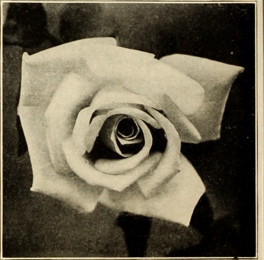 Sophie Scholl and the White Rose Movement