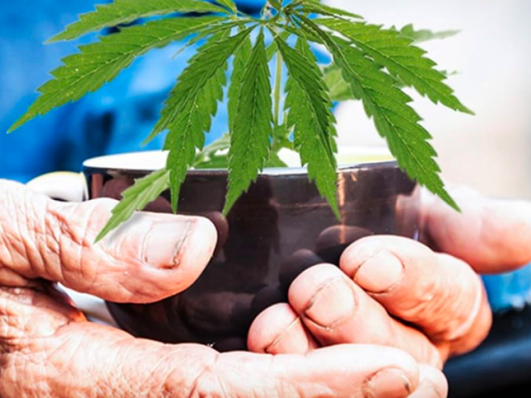 Pennsylvania Aims To Move Forward Both On Medicinal & Adult Use Cannabis Programs