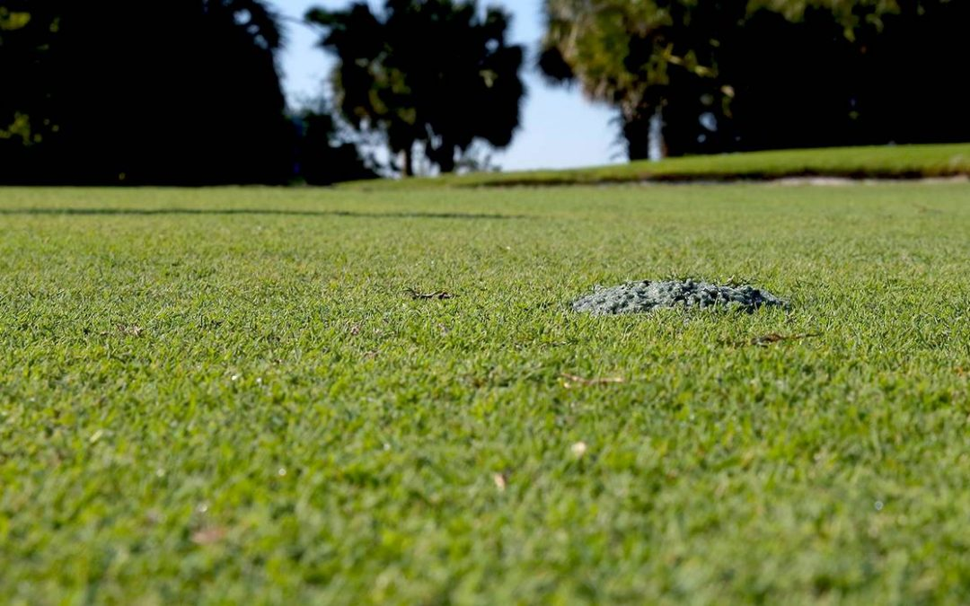 TGIF: Replace Your Divots