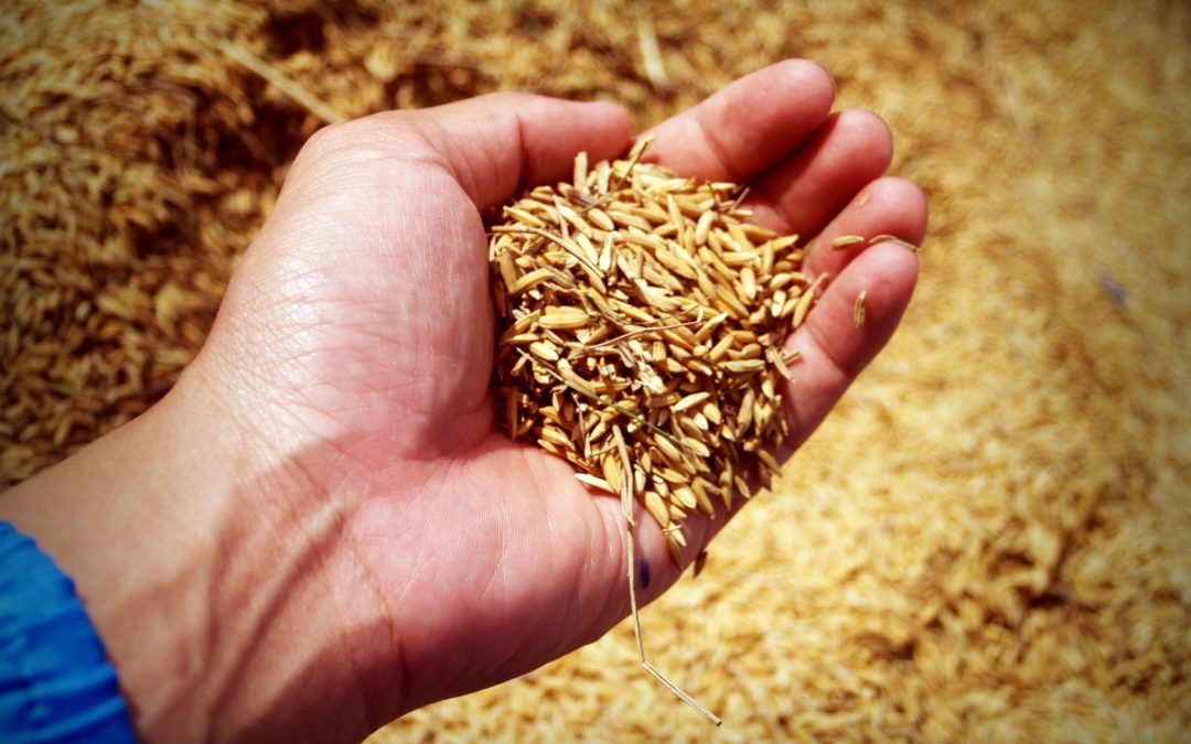 How the Farm Lobby Stifles the International Market