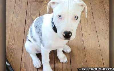 Cops Enter Person's Yard, Shoot 18 Week Old Puppy That 'Couldn't Even Bark Yet'